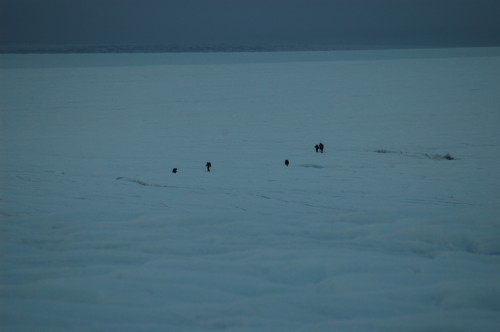 groenland 2007 3 260