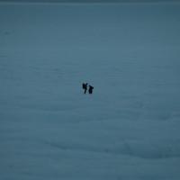 groenland 2007 3 261